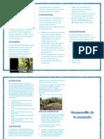 Conservacion de La Amazonia (1)