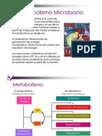 U3b_MetabolismoMicrobiano_19636