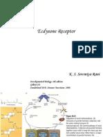 Ecdysone Receptor