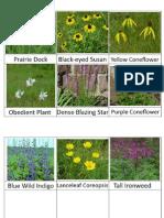WTN Meadow Flowers