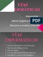 Vías Espermáticas...diapositivas pdf