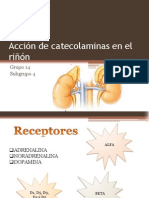 Acción de catecolaminas en el riñón