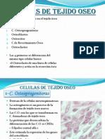 Celulas Oseas