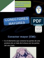 Conectores Mayores en protesis removible