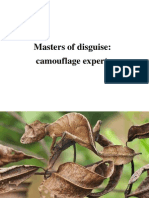 Camouflage Experts
