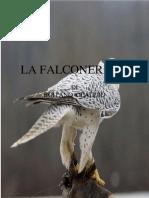 Falconeri A
