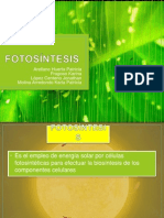 Fotosíntesis ppt fases luminosa y oscura