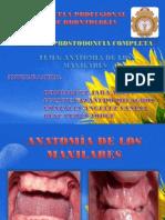 ANATOMÍA DE LOS MAXILARES