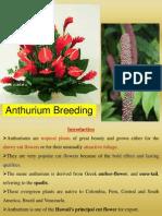 Anthurium Breeding ppt by S Y Chandrashekar