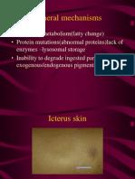 Cellular 2 Fatty Change