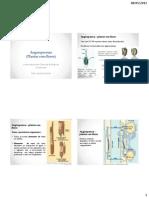 Filogenia Das Traqueofitas Angiospermas Agro IV