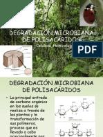 DEGRADACIÓN MICROBIANA DE POLISACÁRIDOS
