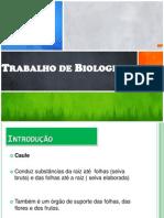 Trabalho Biologia Definitivo