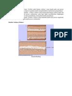 Struktur Sedimen Primer.docx