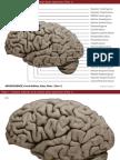 Atlas Figures of neuroscience