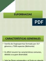 Euphorbia Ce a e