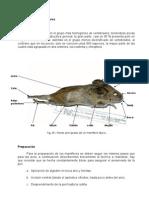 Técnicas de Conservación de Especímenes Animales (10)