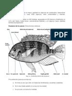 Técnicas de Conservación de Especímenes Animales (6)