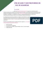 CUANTIFICACIÓN DE ADN Y ELECTROFORESIS EN GEL DE AGAROSA