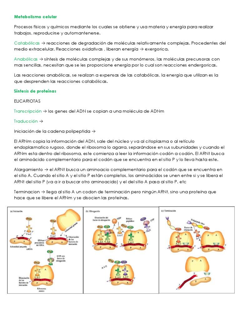 calorias metabolismo basal con el estrés