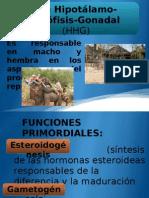 Esteroidogénesis Testicular