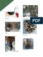 Bio 12 Fungi pictures