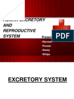 HUMAN EXCRETORY AND reproductive system