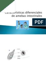 Características diferenciales de amebas intestinales