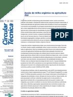 Prod. Milho Organico Agricultura Familiar