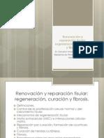 Renovación y reparación tisular. Regeneración, curación y fibrosis.