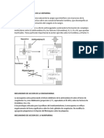 Mecanismo de Accion de La Heparina