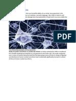 Neuroplasticity and Personal Development