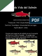 Ciclo del Salmón (Traducción al Español)