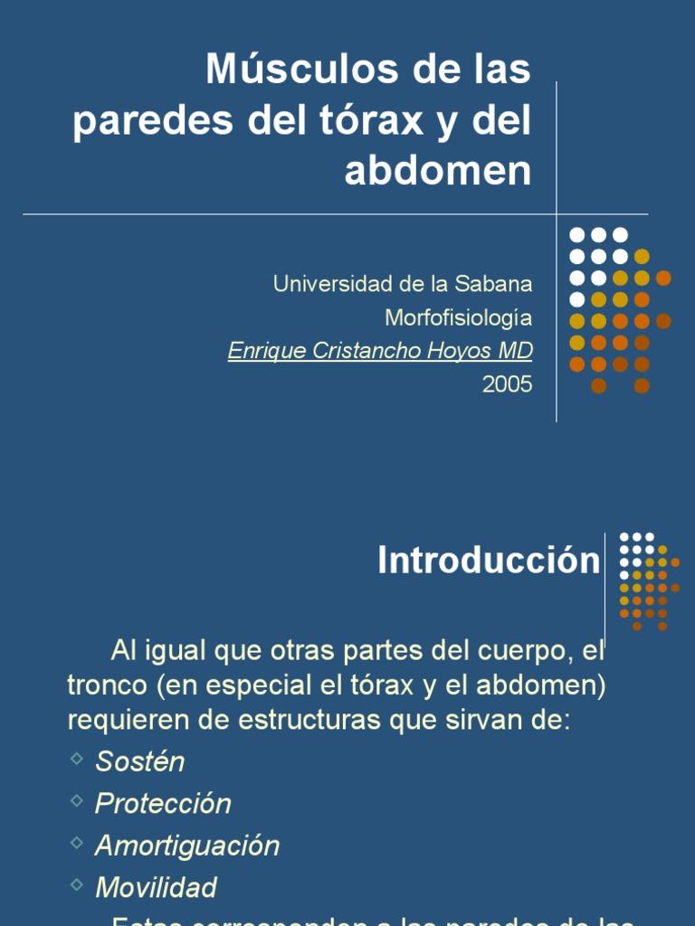 Músculos De Las Paredes Del Tórax Y Abdomen Tórax Abdomen