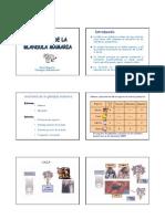 17 - Anatomia y Desarrollo de La Glandula Mamaria