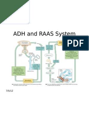Indicator ADH pentru opțiuni