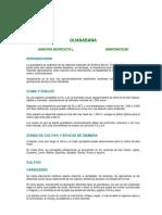 Cultivo de Guanabana