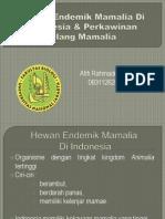Hewan Endemik Mamalia Di Indonesia&Perkawinan Silang Mamalia