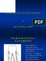 3 Periodontal Ligament