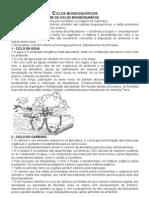 CICLOS BIOGEOQUÍMICOS e Sucessão Ecologica
