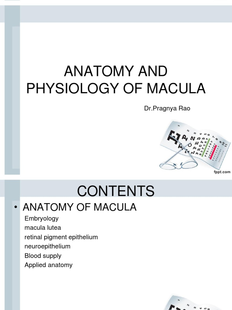 New Anatomy and Physiology of Macula.pptx | Visual System | Retina