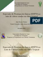 Expressão de Proteínas do Estress (HSP70)