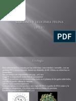 Sarcoma y Leucemia Felina