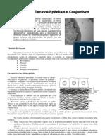 Tecidos Epiteliais e Tecidos Conjuntivos