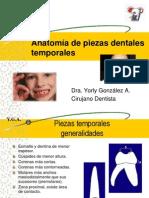 Anatomia Temporales