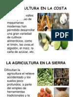 La agricultura en el Perú