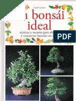 Gejw Un Bonsai Ideal
