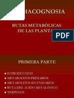 Rutas Metabolicas en Plantas