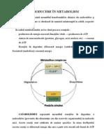 INTRODUCERE+ÎN+METABOLISM