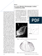 New record of Scapharca cornea (Bivalvia